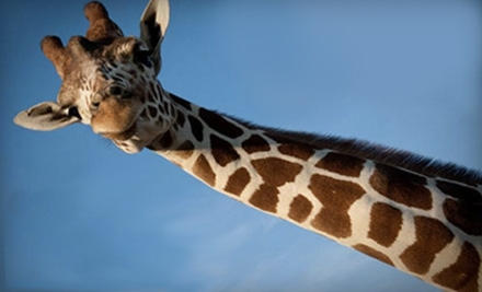 $5 for One Ticket to the African Safari Wildlife Park in Port Clinton (Up to $17.95 Value)