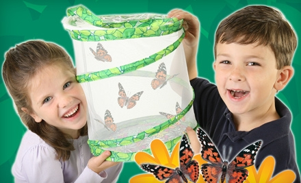Insect Lore grid 6 ***BUTTERFLY GARDEN ONLY $10.00*** DEAL IS STILL AVAILABLE